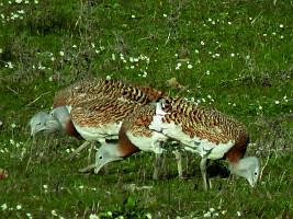 Birding Pal